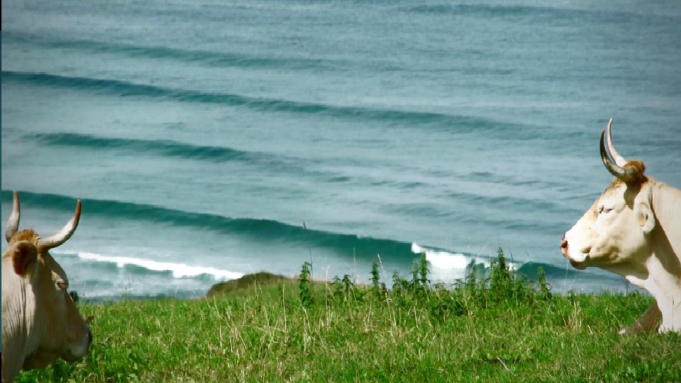PADDLE SURF OYAMBRE